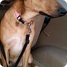 Adopt A Pet :: Girly