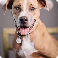 Adopt A Pet :: Alika - Portland, OR