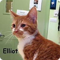 Adopt A Pet :: Elliott - Warren, PA