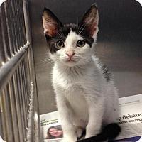 Adopt A Pet :: Oreo - East Brunswick, NJ