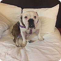 Adopt A Pet :: Poppy - Santa Ana, CA