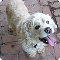 Adopt A Pet :: Emily-Adoption Pending! - Sacramento, CA