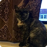 Adopt A Pet :: Penny - Millersville, MD