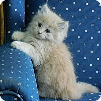 Adopt A Pet :: Savory - Davis, CA