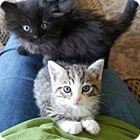 Adopt A Pet :: Haden - Monterey, VA