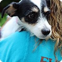 Adopt A Pet :: Sissy - Mount Laurel, NJ