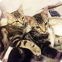 Adopt A Pet :: Zeus and Zane - Arlington/Ft Worth, TX