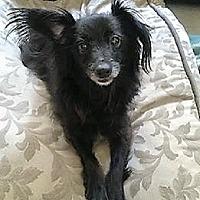 Adopt A Pet :: Waldo - Los Banos, CA