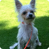 Adopt A Pet :: Frizzy - Lawrenceville, GA