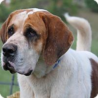 Adopt A Pet :: Aries (aka Nacho) - Marietta, OH