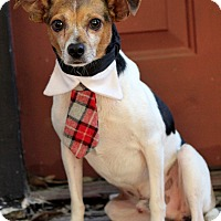 Adopt A Pet :: Eddy - Dalton, GA