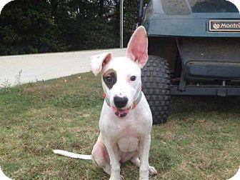 Pit Bull Terrier/Terrier (Unknown Type, Medium) Mix Puppy for adoption in Decatur, Alabama - MacKenzie