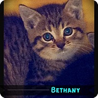 Adopt A Pet :: Bethany - Hartford City, IN