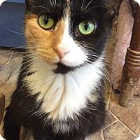 Adopt A Pet :: Tippy - Breinigsville, PA