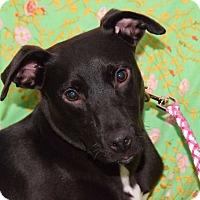 Adopt A Pet :: Madison - New York, NY