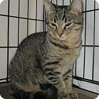 Adopt A Pet :: JASON & JAY - detroit, MI