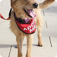 Adopt A Pet :: Fanny - Van Nuys, CA