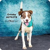 Adopt A Pet :: CROSBY - Conroe, TX