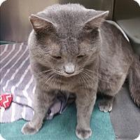 Adopt A Pet :: Lumpy - Chippewa Falls, WI