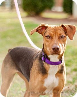 Cattle Dog Rescue Nc