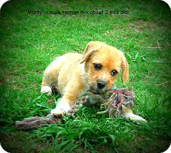 Terrier (Unknown Type, Medium) Mix Puppy for adoption in Gadsden, Alabama - Marty