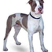 Adopt A Pet :: Jordan - Marina del Rey, CA