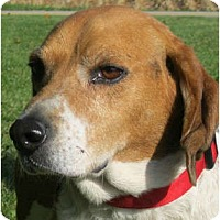 Adopt A Pet :: Roscoe - Jacksonville, FL