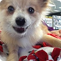 Adopt A Pet :: Sonny ~ Adoption Pending - Youngstown, OH