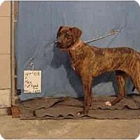 Adopt A Pet :: Meg/Pending - Zanesville, OH