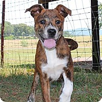 Adopt A Pet :: Judy--Reduced fee $300 - Spring Valley, NY