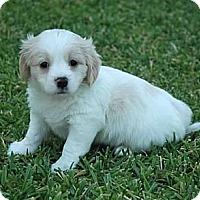 Adopt A Pet :: Greg - La Habra Heights, CA