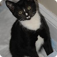 Adopt A Pet :: Carter5