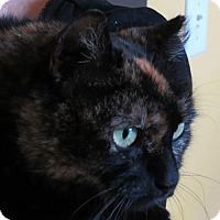 Adopt A Pet :: Lila - Raritan, NJ