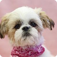 Adopt A Pet :: Pistache - Ile-Perrot, QC