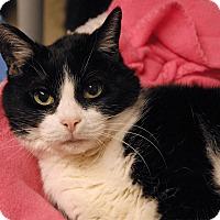 Adopt A Pet :: Olivia - Winchendon, MA