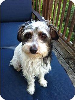 Rescue Small Dogs Austin Tx
