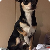 Adopt A Pet :: Gizmo - North Olmsted, OH