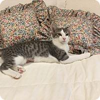 Adopt A Pet :: SANSA aka BEYOND - Hamilton, NJ