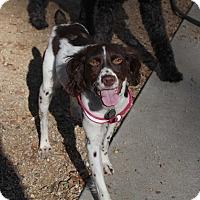 Adopt A Pet :: Delilah - Buena Park, CA
