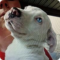 Adopt A Pet :: Zulie - Milton, GA