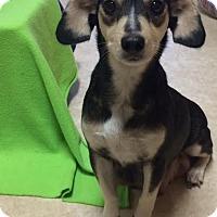 Adopt A Pet :: Lydia - Baton Rouge, LA