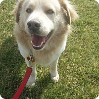 Adopt A Pet :: Baron - Hagerstown, MD