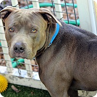 Adopt A Pet :: Jacoby - Ft. Lauderdale, FL