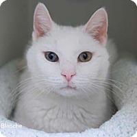 Adopt A Pet :: Blanche - Merrifield, VA