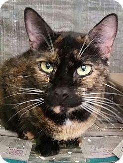 Calico Cat for adoption in Ocala, Florida - Nala *6-8 Yrs