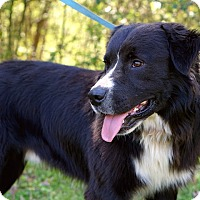 Adopt A Pet :: *Brody - PENDING - Westport, CT