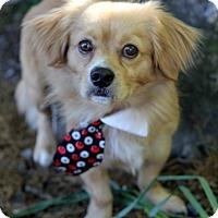 Adopt A Pet :: Noah - Dalton, GA