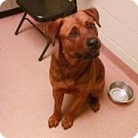 Rottweiler Mix Dog for adoption in Columbus, Georgia - General 6708