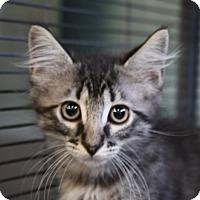 Adopt A Pet :: Aaron - Sarasota, FL