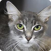 Adopt A Pet :: Angel Rose - Sarasota, FL